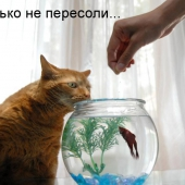 funny_cats_18
