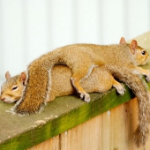 1270889657_squirrels_are_lazy_01