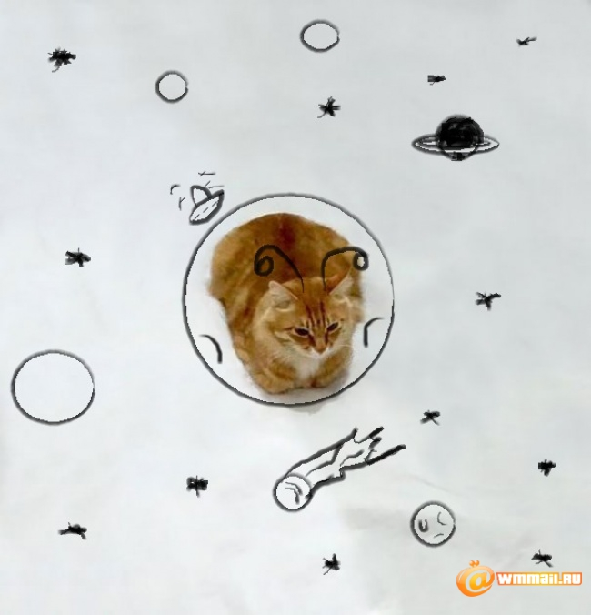 4949610-650-1449482348-funny-doodles-on-lovely-cat-photo3__605